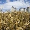 Grupo Duhau: nuevo jugador en el mercado de etanol producido en base a maíz