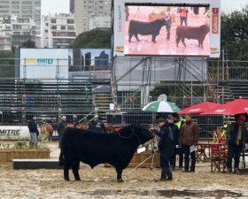 Pandemia: hasta la Sociedad Rural Argentina recibirá ayuda del Estado para abonar salarios