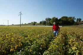 El USDA prevé más soja en EE.UU: operadores especulativos aprovecharon para incrementar apuestas bajistas