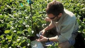 Gases de efecto invernadero: investigadores de la Fauba determinaron que el cultivo de soja lidera la emisión de óxido nitroso