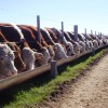 El maíz llegó a los 4000 $/tonelada: mala noticia para los empresarios agroindustriales que apostaron al valor agregado