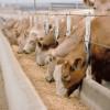 Viva la ganadería: exportadores pagan fortunas por el sorgo para evitar que los invernadores se queden con todo