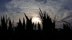 Gruesa en riesgo crítico: esta semana no se prevén lluvias importantes en las zonas bonaerenses necesitadas de agua
