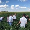 La lección estadounidense: cuidado con sembrar semilla de uso propio de mala calidad