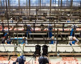 Alerta sanitario: sigue ingresando carne porcina danesa a pesar de evidencias que indican riesgo para humanos por una bacteria resistente a antibióticos
