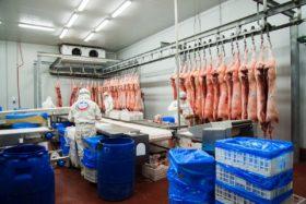 Oportunidad: Argentina ya tiene once frigoríficos porcinos habilitados para exportar carne a China