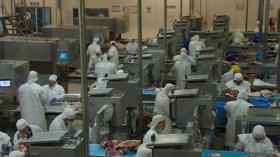 Argentina regalada: el precio del novillo de exportación ya cuesta la mitad que la categoría equivalente en Uruguay
