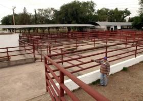 Difícil hacerlo mejor: en la última década la participación argentina en el mercado mundial de carne bovina pasó del 9,2% al 1,9%