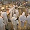 Uruguay: comienzan a reforzar controles para evitar que los frigoríficos apliquen descuentos indebidos a los productores