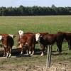 Contratos de arrendamientos ganaderos con cláusula de amortizaciones: una herramienta para poner en producción campos abandonados por la agricultura