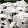 Bloqueo comercial: en agosto las exportaciones brasileñas de proteínas animales a Rusia crecieron casi 14% para generar 65 M/u$s adicionales