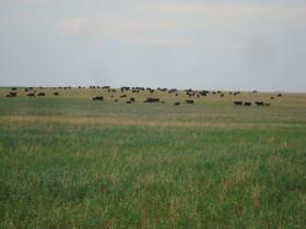 En lo que va del año Uruguay exportó dos veces más cortes frescos bovinos que Argentina: Brasil doce veces más
