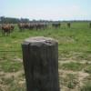 Tormenta perfecta: la ganadería argentina ingresó en un nuevo proceso de liquidación con caída del consumo interno de carne