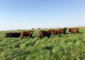 Los empresarios ganaderos y lecheros CREA se preparan para incrementar la producción