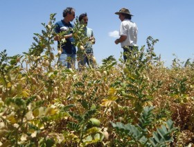 Doble castigo: las retenciones móviles son más elevadas para los productores de legumbres que obtuvieron calidades regulares