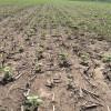 Ofrecen forwards de girasol 2020/21 de hasta 330 u$s/tonelada para incentivar siembras