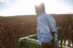 Productores de girasol: las otras víctimas del default de Vicentín
