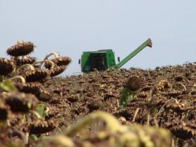 Década perdida para el girasol: caída de exportaciones del 90% con cuatro compañías expulsadas del negocio