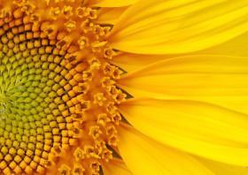Nuevo criterio para comercializar aceite de girasol: ahora podrá conocerse con mayor precisión cuáles son los más beneficiosos para la salud