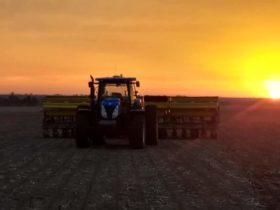 Por la presión creciente de las malezas problemáticas un 35% del área de girasol en el NEA dejó de sembrarse en directa
