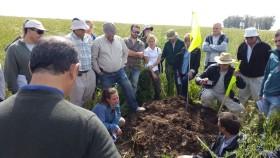 General Levalle: capital nacional de los cultivos de servicio