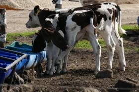 Menos mal que el precio de la leche en polvo es una lágrima: si llegara a subir los lácteos van camino a ser un producto de lujo para los argentinos