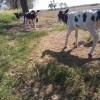 La crisis tambera se padece en las góndolas: los lácteos volvieron a liderar las subas de precios en el primer mes del año