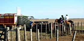 En las próximas dos semanas habrá inconvenientes para comercializar hacienda: ATE-Senasa lanzó un nuevo paro a partir del lunes