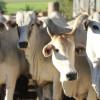La revancha tropical: casi el 80% de la carne vacuna importada por chilenos proviene de Paraguay y Brasil