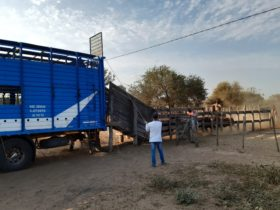 """Covid-19: empresarios ganaderos piden auxilio ante la imposibilidad de comercializar hacienda por """"cercos logísticos"""" provinciales"""