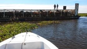 Tiempo de descuento para evacuar la hacienda en islas: la semana que viene se agravará la crecida del Paraná