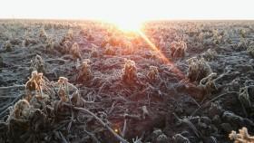 """Luego del """"veranito"""" se vienen a partir del domingo heladas intensas en la zona central del país"""
