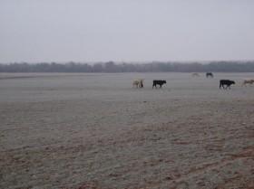 Llegó el frío: habrá heladas sobre el sur de la región pampeana