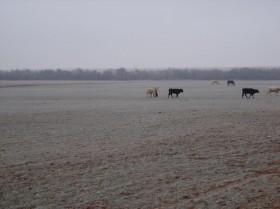 El frío no afloja: el lunes ingresa una nueva masa de aire polar
