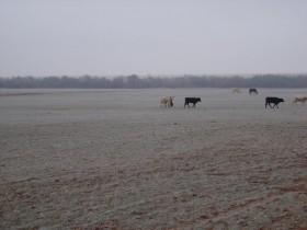 Mañana habrá una baja abrupta de las temperaturas: alerta por heladas intensas en la región pampeana
