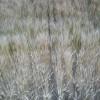 Mañana se prevé la aparición de heladas sobre el sur de la región pampeana
