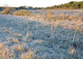 Mañana habrá heladas sobre la región central del país