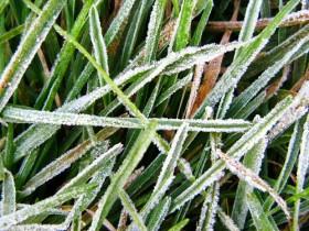 Mañana se prevén heladas intensas sobre la mayor parte de las regiones productivas