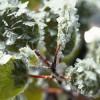 Mañana habrá riesgo de heladas sobre el sector sur de la región pampeana