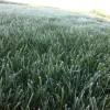 Alerta por el ingreso de una masa de aire polar: el miércoles se prevén heladas intensas sobre la región pampeana