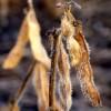 Llegó el frío: mañana habrá riesgo de heladas sobre la región pampeana