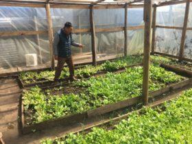 Declararon la emergencia agropecuaria en Corrientes por temporales intensos