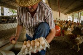 La inflación avícola fue del 40% en el último año: 17 puntos más que el promedio de la canasta de alimentos básicos