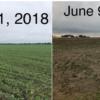 El USDA se tomó un mes más para evaluar daños en soja estadounidense por inundaciones: golpe bajista para el poroto sudamericano
