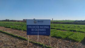 La receta del gobierno uruguayo: financiar la compra de semilla certificada para promover el crecimiento del sector agrícola