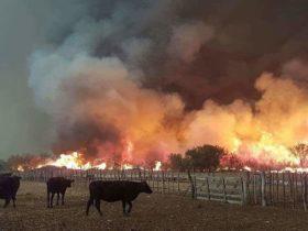 Declararon la emergencia agropecuaria por incendios en La Pampa y Mendoza
