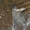 Los incendios no se pueden evitar: pero sí los desastres generados por la desidia pública