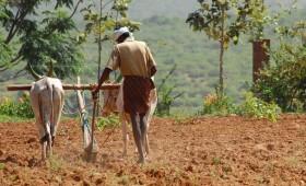 Sigue cayendo el precio internacional de los fertilizantes fosforados por el derrumbe de la demanda india