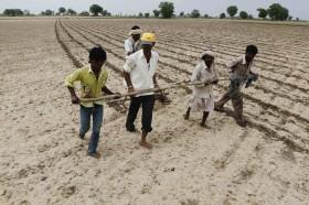 Los precios de importación de los fertilizantes fosfatados siguen planchados gracias al derrumbe de la demanda india