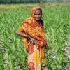 Gracias totales a los indios: siguen baratísimos los precios internacionales de los fertilizantes fosfatados